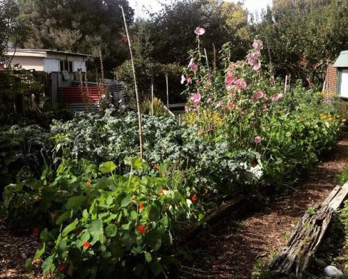 Photo of raised garden representing Christchurch as the Garden City. Photo taken by EGL Christchurch participant Christopher Vining, all rights reserved.